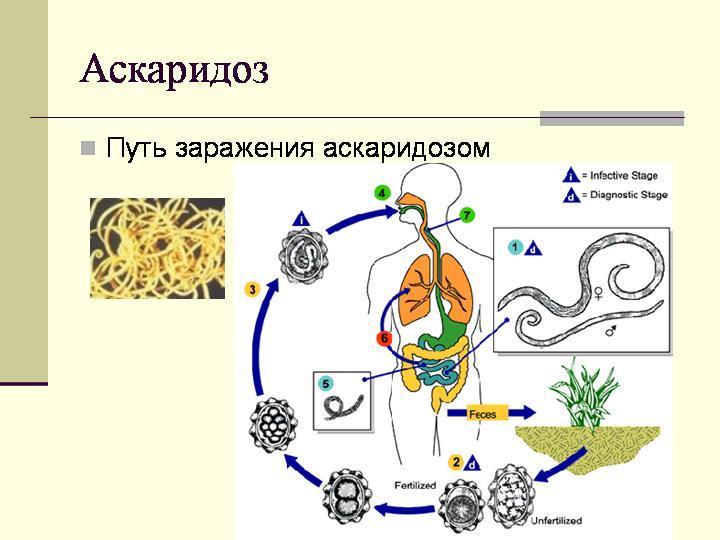 признаки паразитов в кишечнике у человека