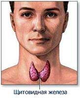 Щитавидная железа